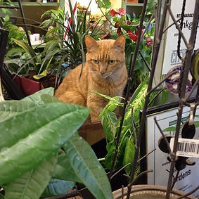 ginkgo the cat2.jpg