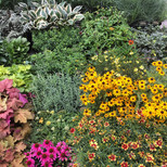 Native perennials