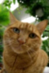 ginkgo the cat.jpg