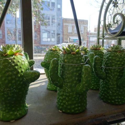 Cacti planters