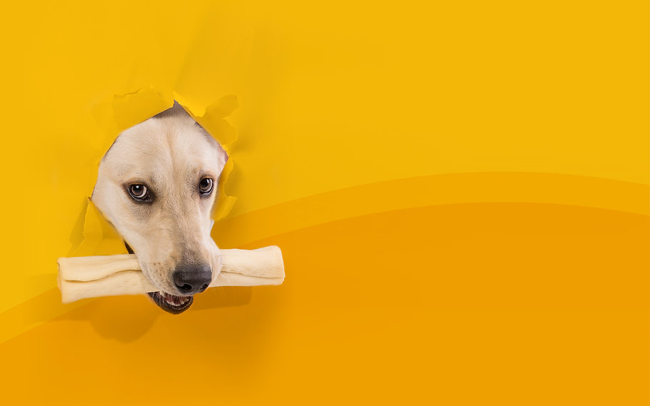 Barkie pets dog chewing a rawhide roll