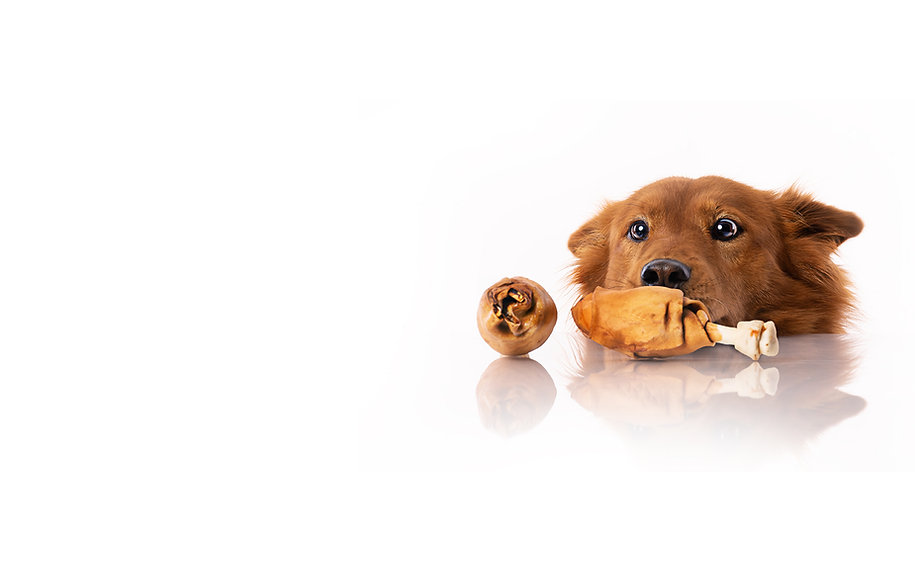 Barkie dog chewing rawhide chiken legs