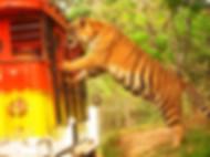 Subic Safari tour packages