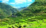 Banuae Famous rice terraes
