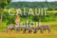 Calauit Tour Packages