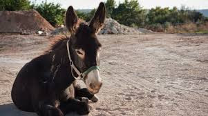 Of talking donkeys and resurrections
