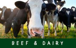 Beef & Dairy Schedule