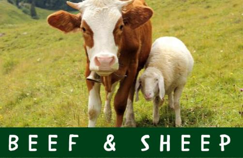 Beef & Sheep Schedule