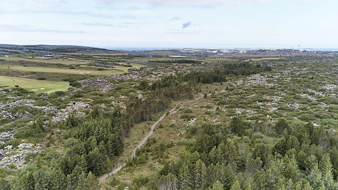 Búrfellshraun 2019-06-15-335-minni útgáf
