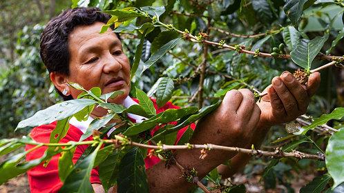 Organic Peru
