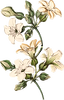FG-Flower-8.png
