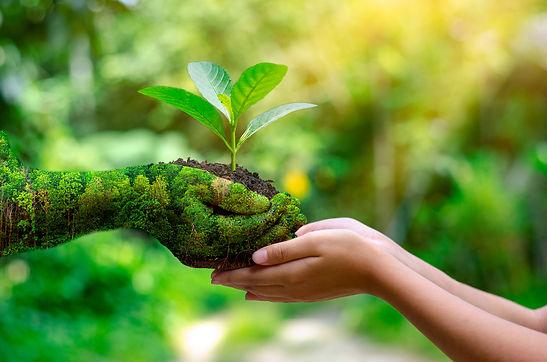 environment-earth-day-hands-trees-growing-seedlings.jpg
