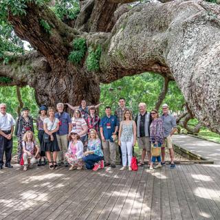 Treaty Oak Tour, San Marco, Jacksonville