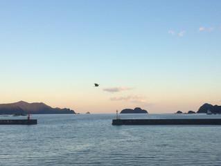 近海マグロ延縄船「第十一良栄丸」第21回目(今年度10回目)の操業を終えて、2月17日(月)に水揚げを行います!!