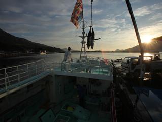 近海マグロ延縄船「良栄丸」第79回目 (2019年 第8回目)の操業を終え て、9月12日(木)に水揚げを行います !!