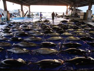 近海マグロ延縄船「良栄丸」は第84回目(2020年第3回目)の操業を終え 2月27日(木)に水揚げを行います!!