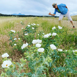 Doc with the prickly poppies