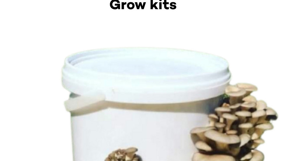 10 ltr buckets grey oyster mushroom grow kits
