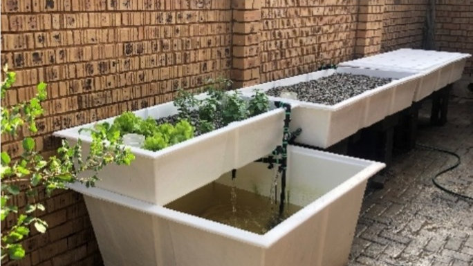 Micro home aquaponic system