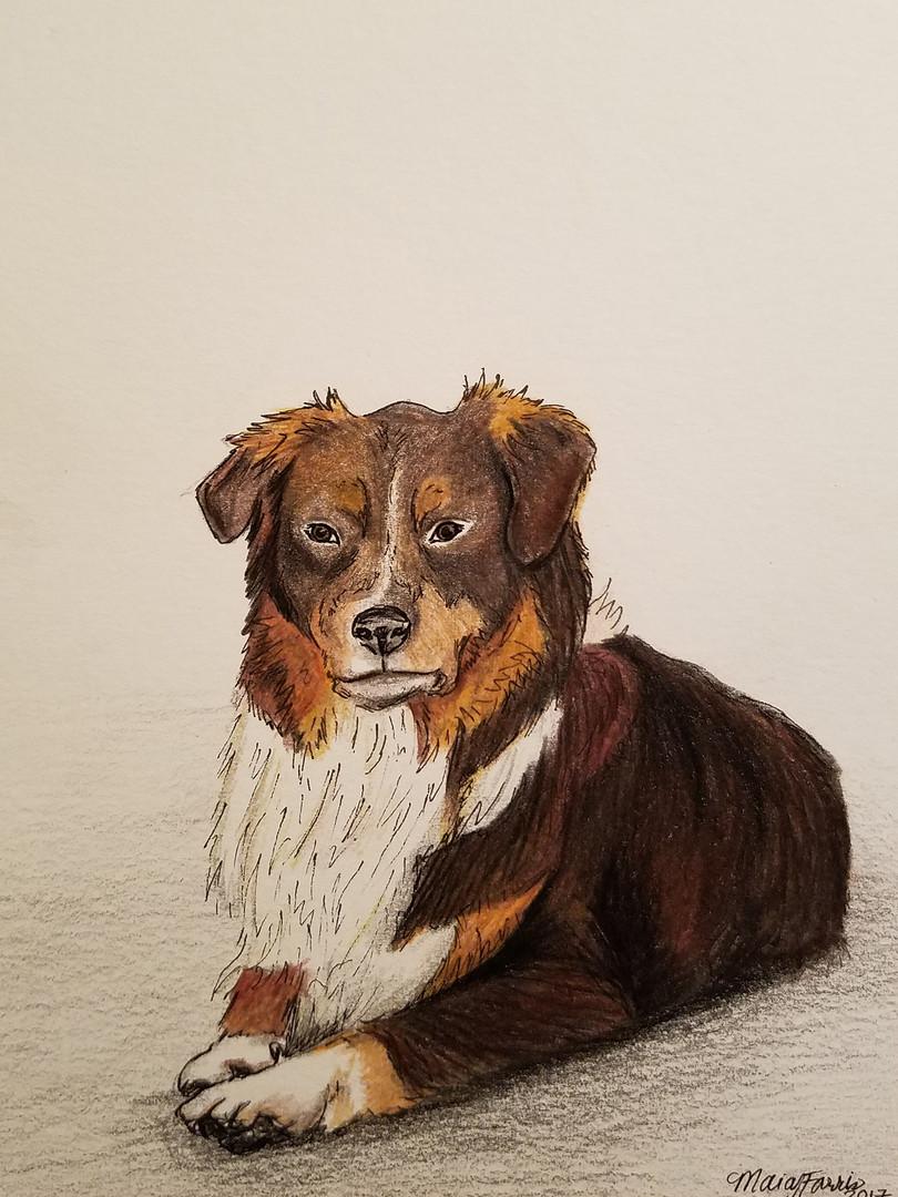 Chance - Dog portrait
