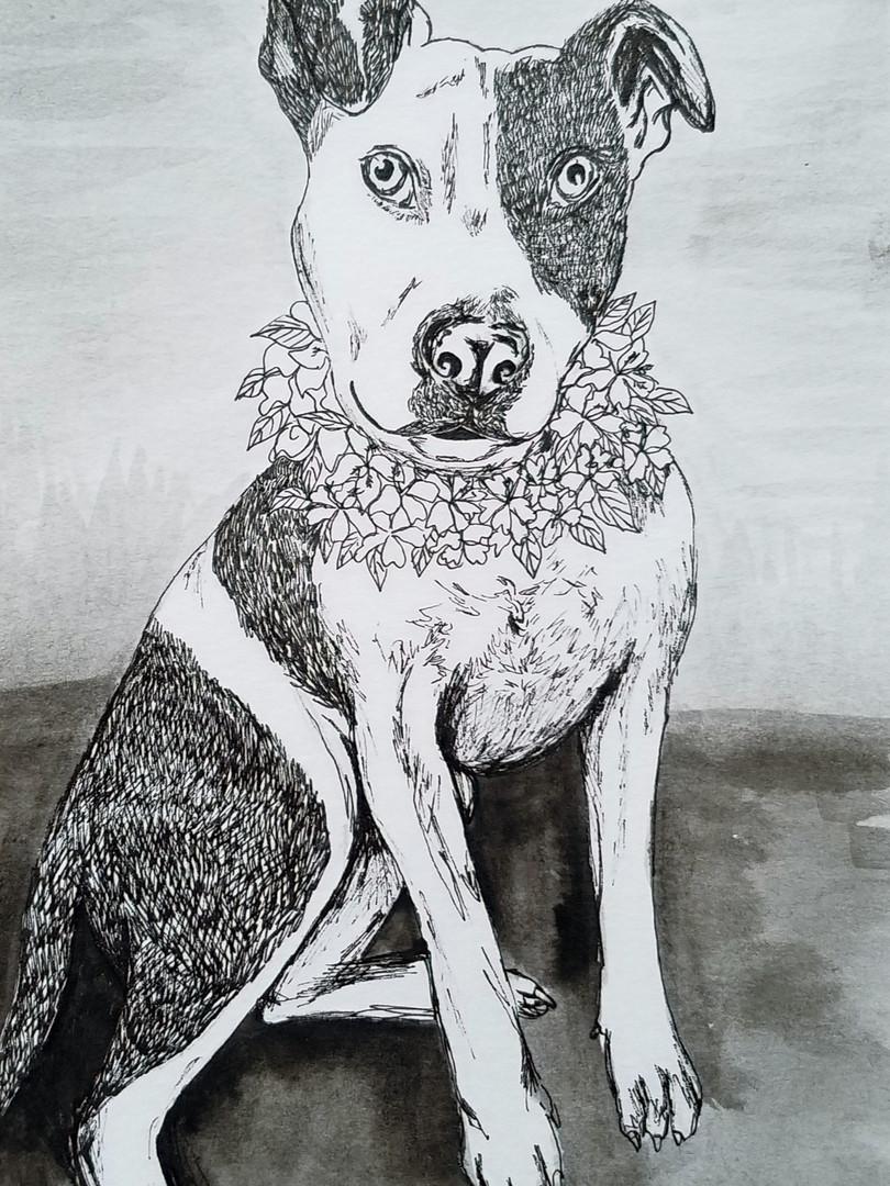 Nani - Dog portrait
