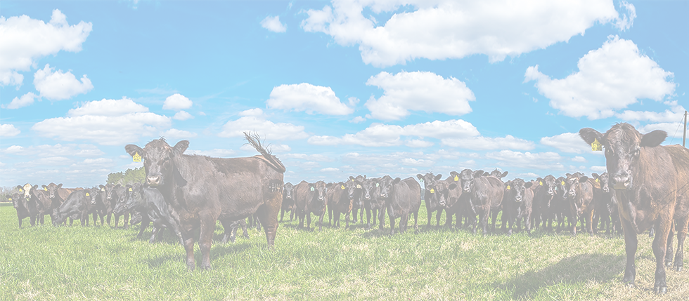 Grandin Livestock Handling Systems, Inc. Grandin Handling Systems, Cattle, Ranch Corrals, Stock Yards, Lairage, Chute, Race, Humane Livestock, Abattoir, Stock Pens