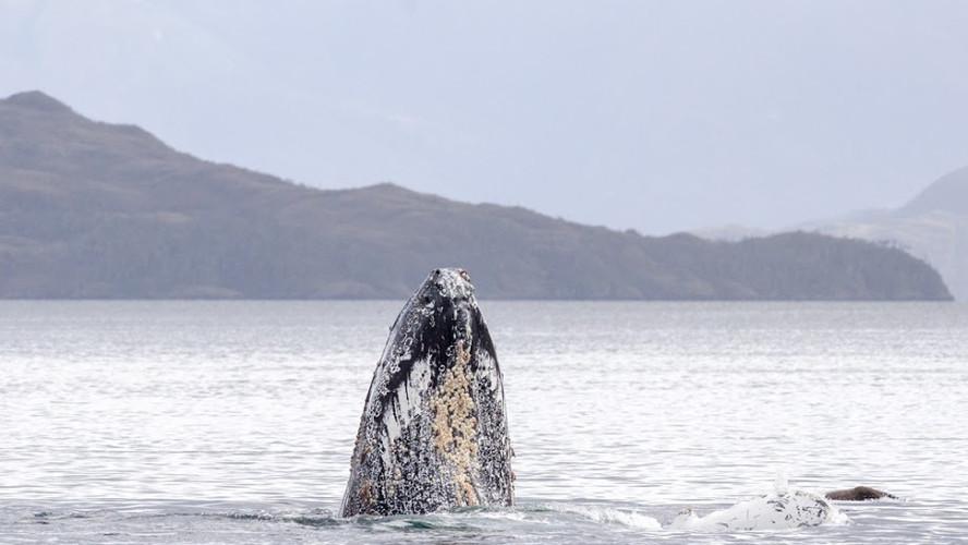 Solo Expediciones Ballenas