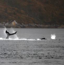 ballenas parque marino francisco coloane