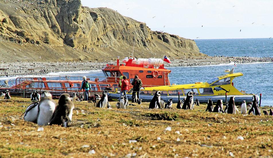 Isla Magdalena pinguinos