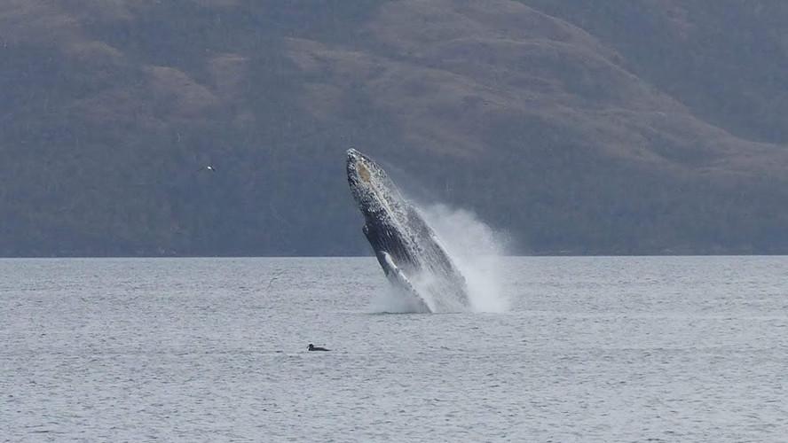 Whale Watching Punta Arenas