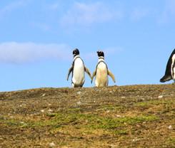 pinguinos de la mano