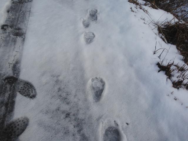 クマの足跡・・・