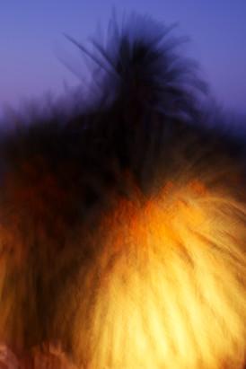 Orange tittie monster