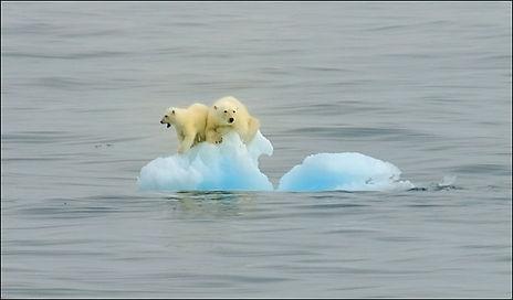 Polar-Bear_solent2__996877a.jpg