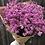 Thumbnail: Boeket dried flowers