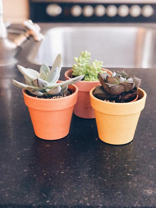 Vetplantjes per 3