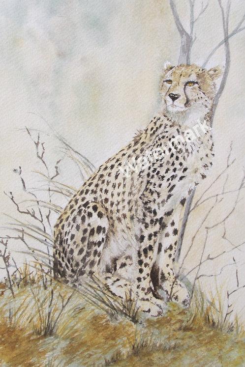 Cheetah - Original Watercolour by William Mans