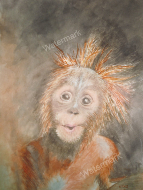 Orang-Utang - Original Watercolour by William Mans