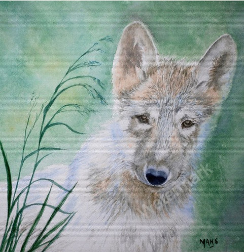 Gray Wolf - Original Watercolour by William Mans