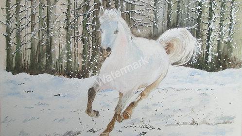 Snow Stallion - Original Watercolour by William Mans