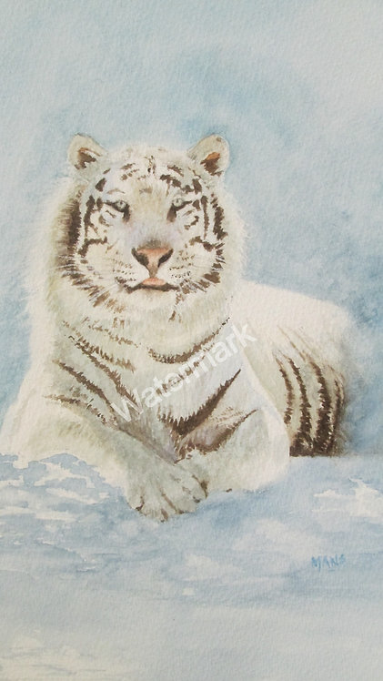 Siberian Tiger - Original Watercolour by William Mans