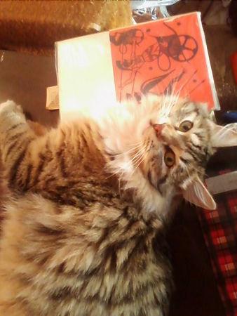 Мой котик Джеф читает Гомера.jpg