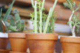 Plantenpotten