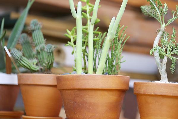 Pots de fleurs-plantes -jardin plantes-cadeaux -ballons-anniversaire