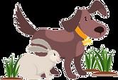animals-asstdact.png