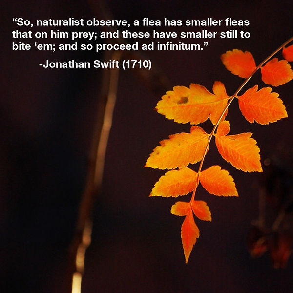 So naturalist observe - Jonathan Swift.J