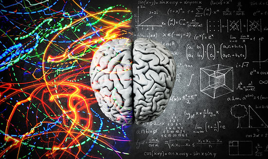The concept of the human brain. The righ