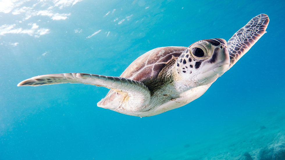 sea turtle unsplash
