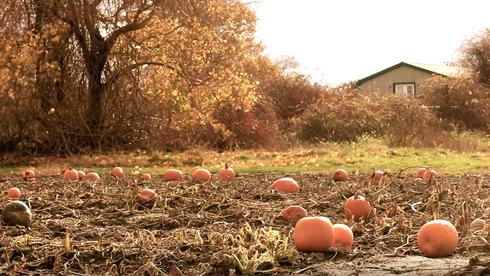 A Pumpkin Affair