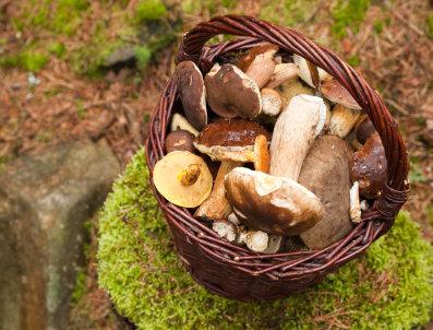 Natural Wild Mushroom & Sage EVOO